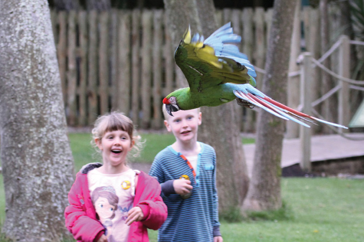 Free Flying Bird Show At Paradise Park Cornwall