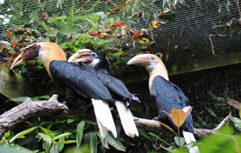 Newquay Zoo 2