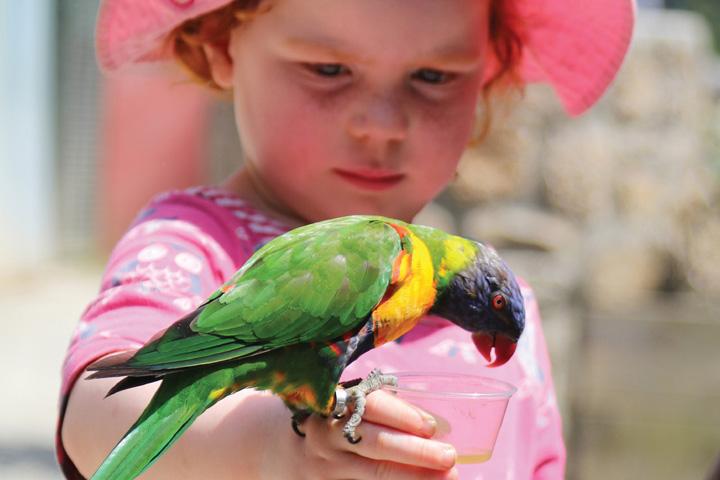 Parrot Encounter At Paradise Park Cornwall