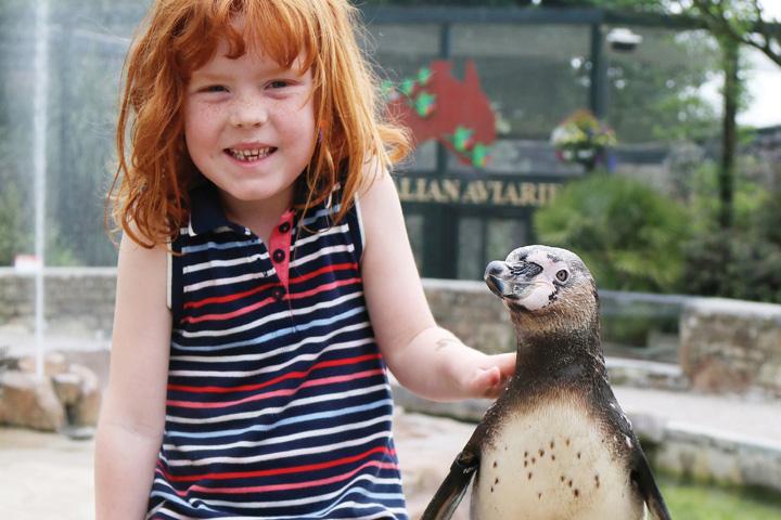 Penguin Encounter At Paradise Park Cornwall