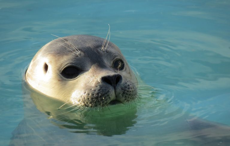 Seal pops up in the water
